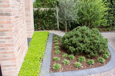Specimen Pine, Clipped Buxus Hedge, Cobble Edged Driveway
