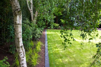 Existing Trees married with new planting, lawn edging